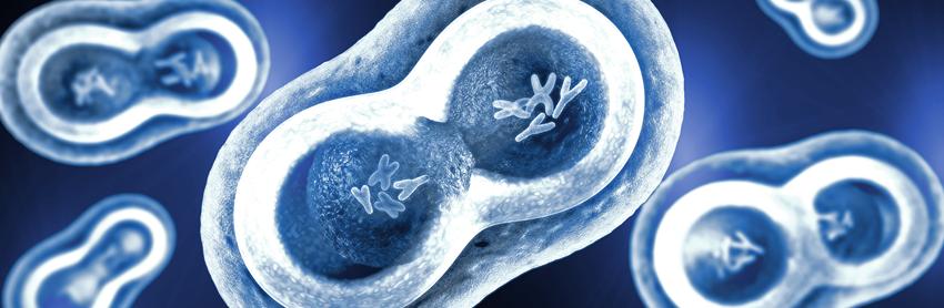 Aptuit   ADME   Absorption, Distribution, Metabolism and Excretion